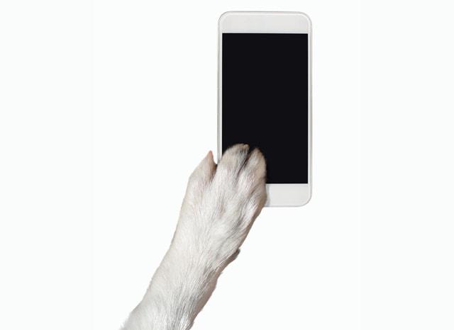 スマホを触る犬の手