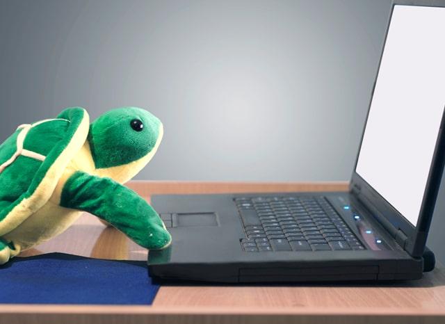 パソコンの前に置かれた亀のぬいぐるみ