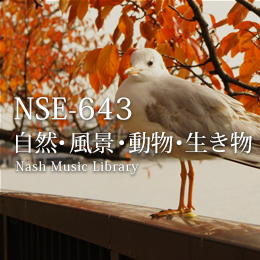 NSE-643 38(1)-Nature/Landscape/Animals/Creatures