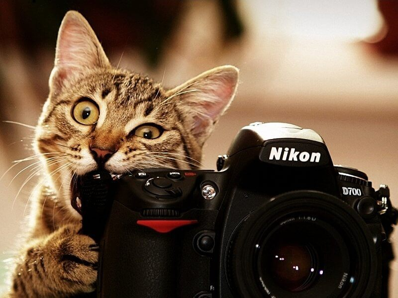 Cats_bite_funny_cameras_nikon_kittens_photo_camera_biting_800x600_(1)