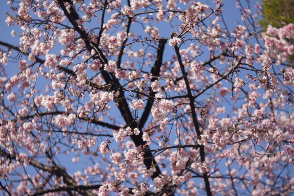 【写真】春の日差しに一年越しの冬解けを願いながら