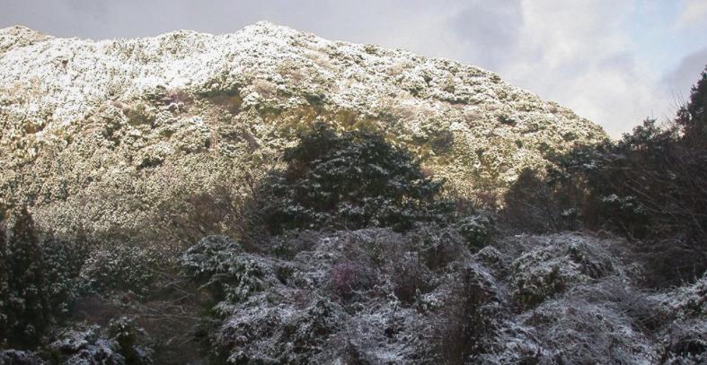 だれもいない山は石にあふれている:化石を探索中