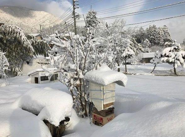 バイオフィリア第0侯Vol.2                           〜厳しい越冬