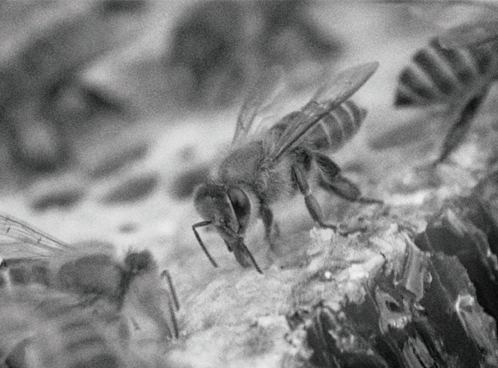 なぜ、セイヨウミツバチの蜂蜜を取り扱うことにしたか。