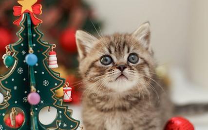 シチュエーション別☆クリスマスに見たい映像作品