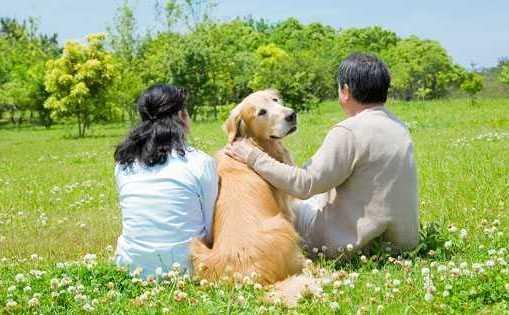 あなたにも犬たちの気持ちがわかっちゃうストーリー!『ペット』