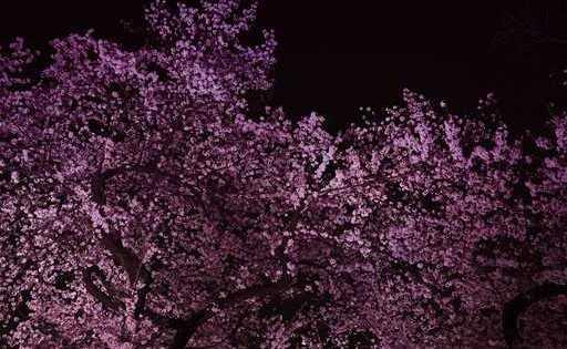 春の宵、咲き誇る闇【櫻憑き】