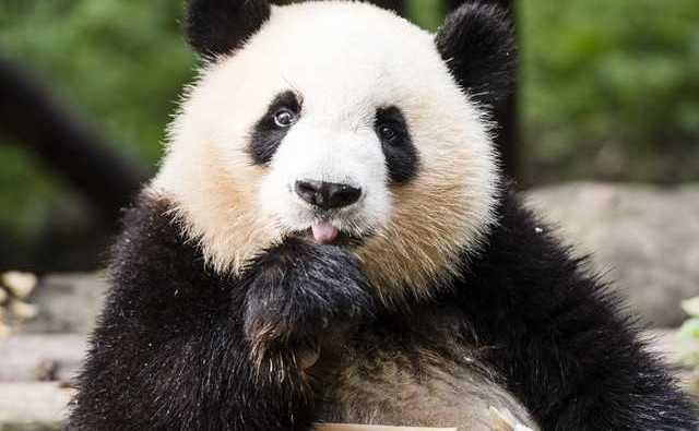 自然を見せるウォルト・ディズニーのドキュメンタリー映画『Born in China』