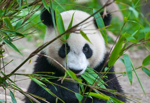 【上野】動物園でパンダデートを楽しむためのポイント!