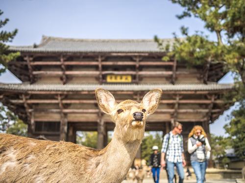 【奈良】古都をめぐる旅に出かけよう!おすすめの観光スポット8選