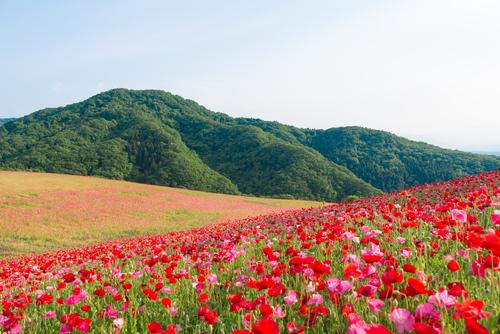 首都圏から近い!いつでも訪れられる埼玉県のデートスポット10選