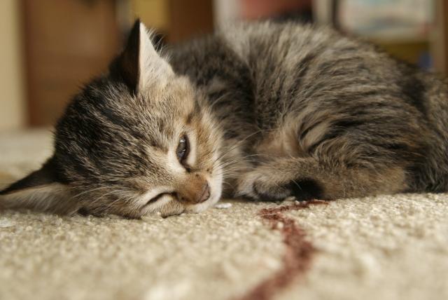 頭痛ーる気圧ペット体調影響