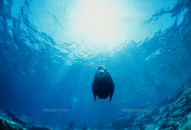 SEA LION, BAJA CALIFORNIA, MEXICO