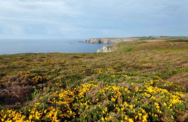 沿岸の花[00293022075]| 写真素...