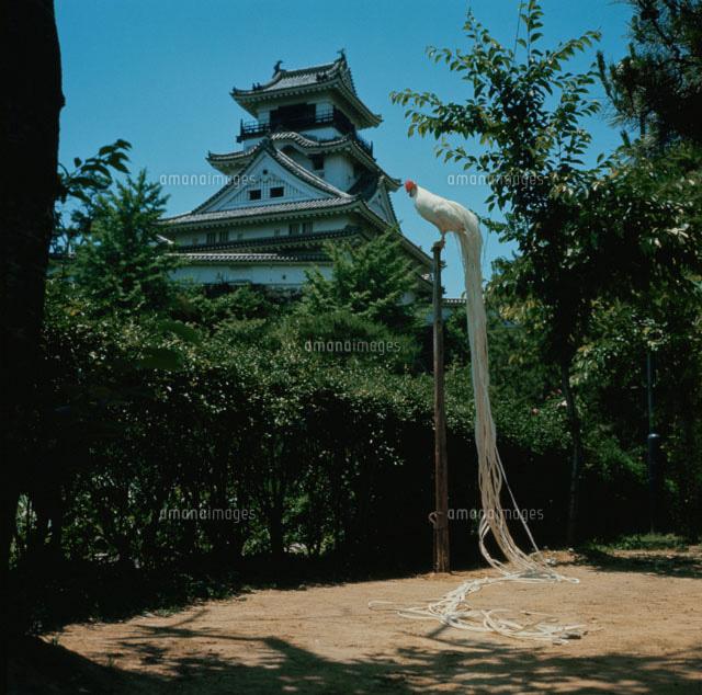 尾長鳥と日本の城01053022511の写真素材イラスト素材アマナイメージズ
