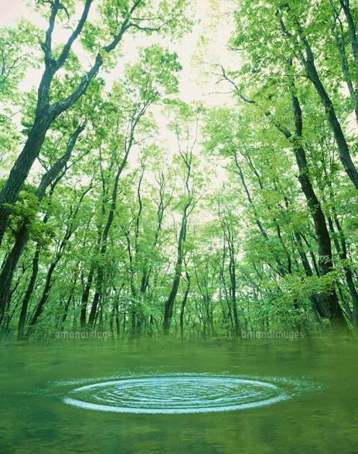 森と水 フォトイラスト01259012890の写真素材イラスト素材アマナ