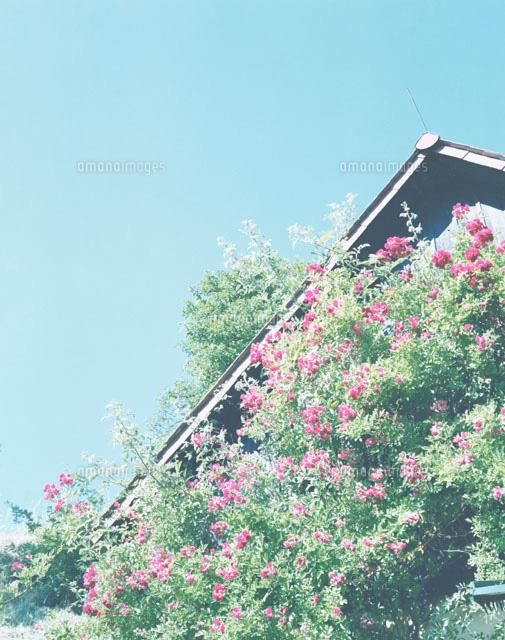 赤い花が咲く家[01486000134]の...