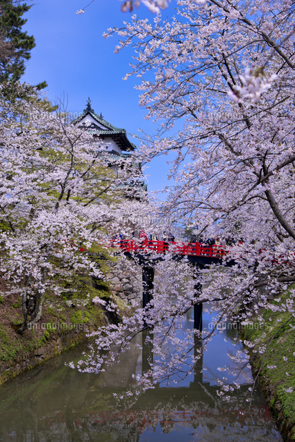 弘前城の桜