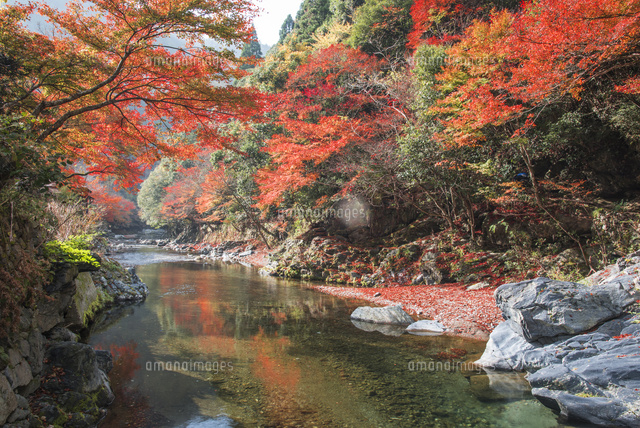 紅葉の清滝川