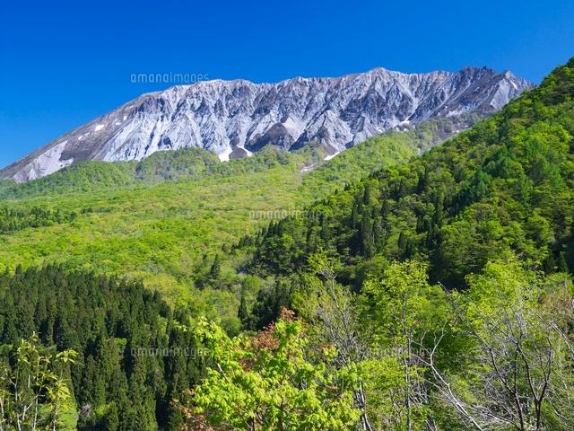 新緑の鍵掛峠より大山