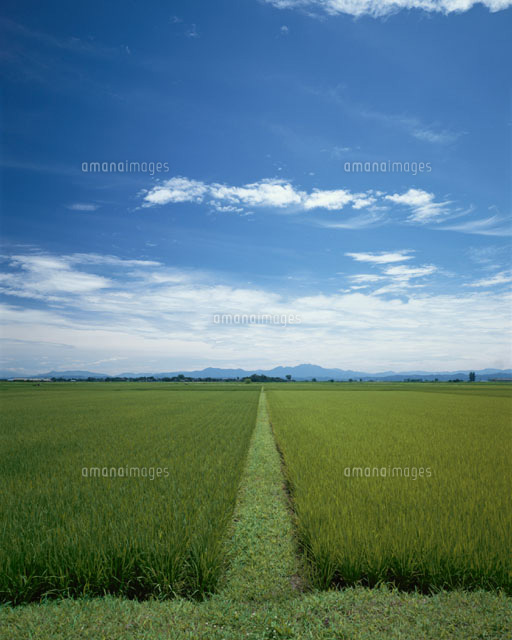 越後平野の水田 新潟