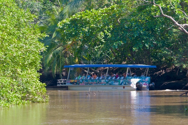 Mangrove River Cruise, Tarcoles River, Nicoya Peninsula