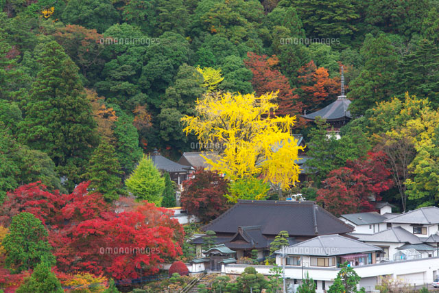 紅葉の大窪寺
