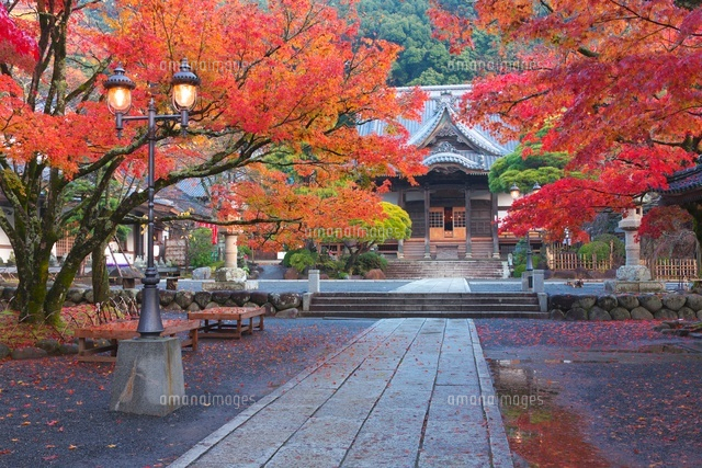 紅葉の修善寺