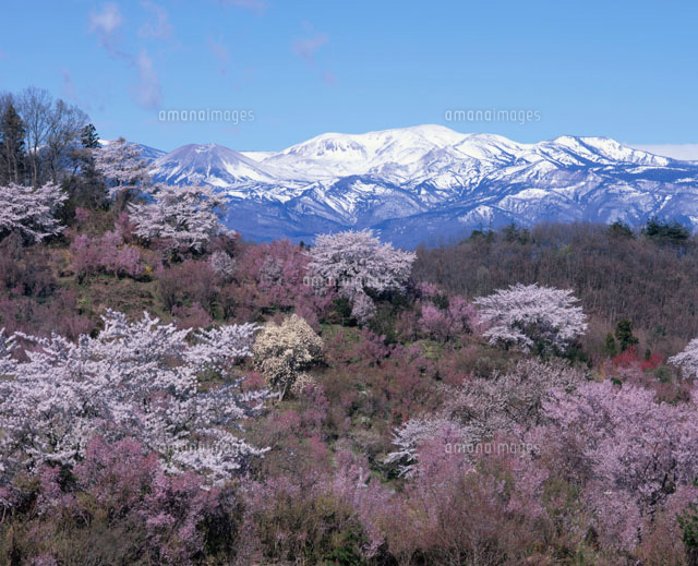 花見山公園と吾妻山
