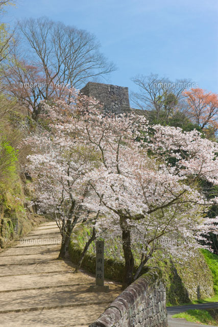 岡城跡と桜