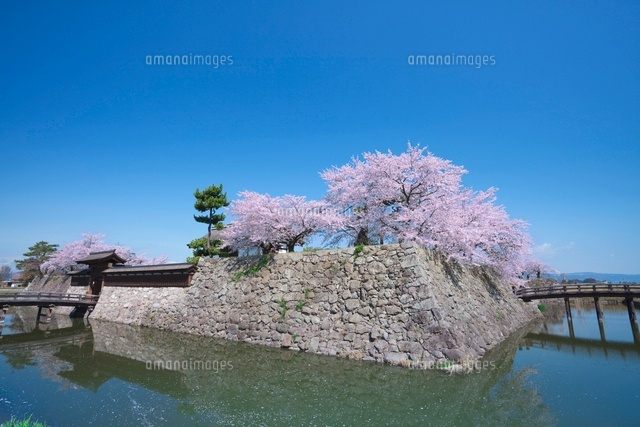 松代城跡と桜