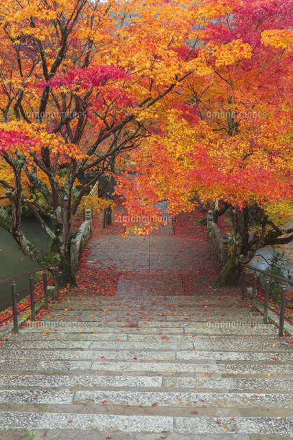 紅葉の永谷山円通寺