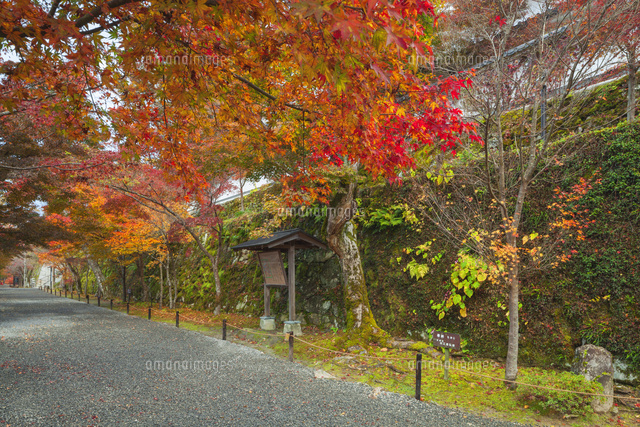 紅葉の三千院参道