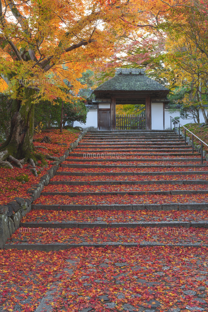 紅葉の安楽寺