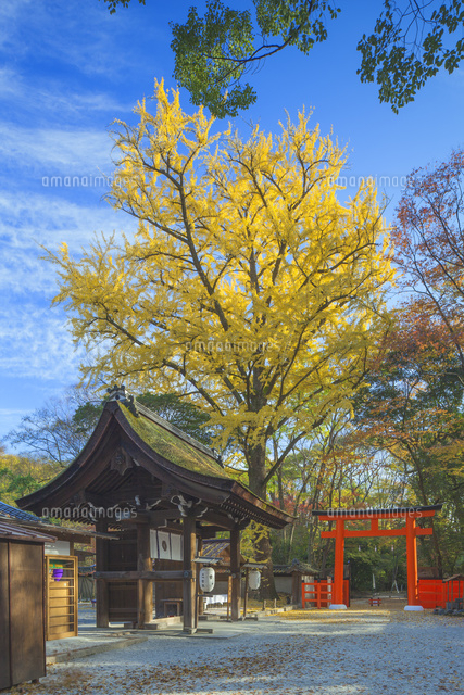 秋の河合神社