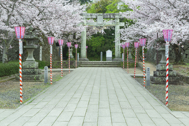 桜と大村公園