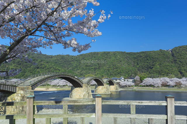 桜の錦帯橋