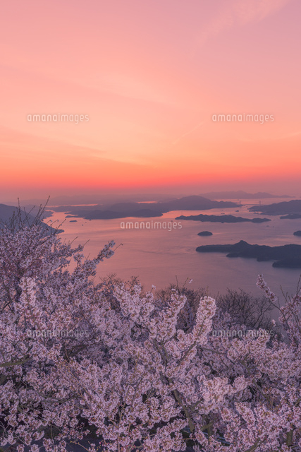 竜王山と桜の朝焼け