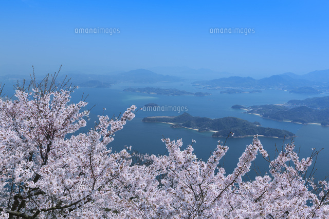 竜王山と桜