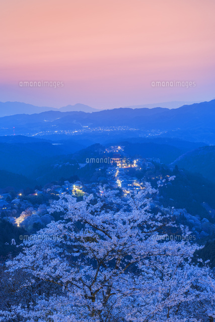 吉野山の桜の夕景