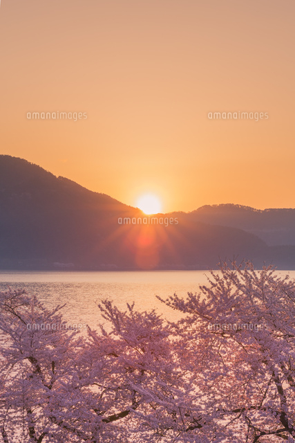 海津大崎の桜と朝日