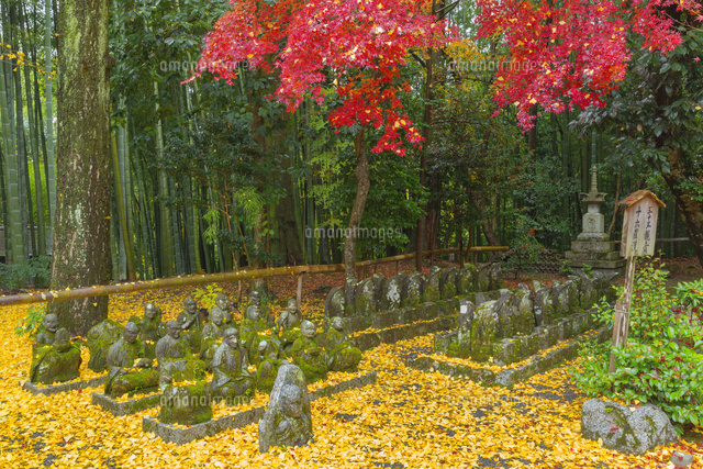 紅葉の赤山禅院