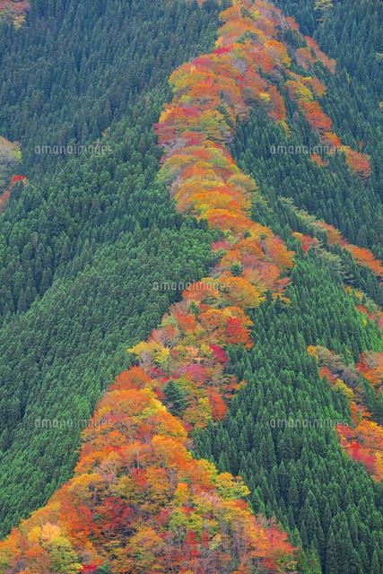 ナメゴ谷の紅葉[01801018017]  ...