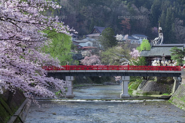 桜と中橋