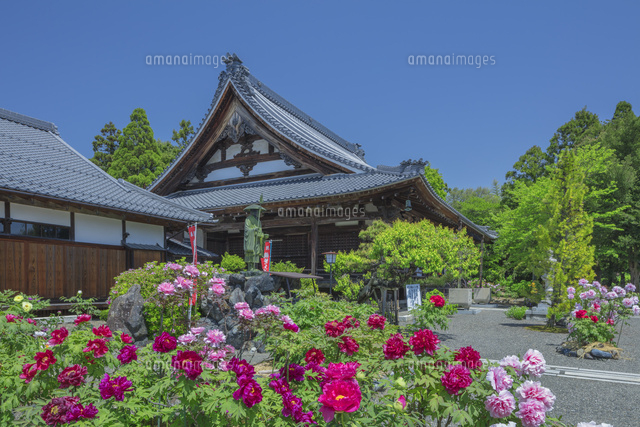 ボタン咲く総持寺