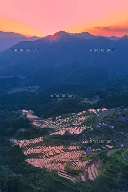 丸山千枚田の夕景