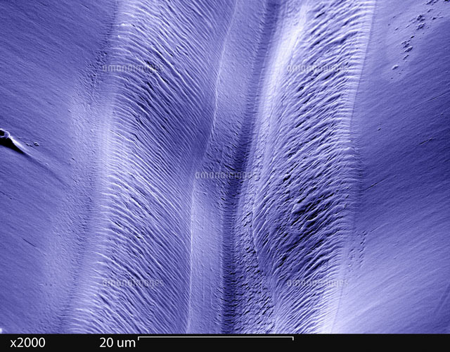 SEM of a Record