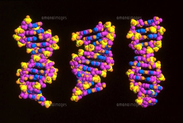 Forms of DNA