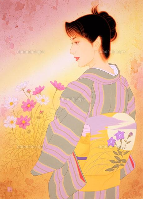 着物桔梗の帯コスモス02237001905の写真素材イラスト素材