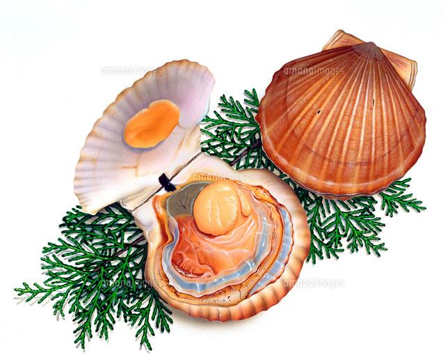 殻をを開けている時と閉じた状態のホタテ貝02237006135の写真素材
